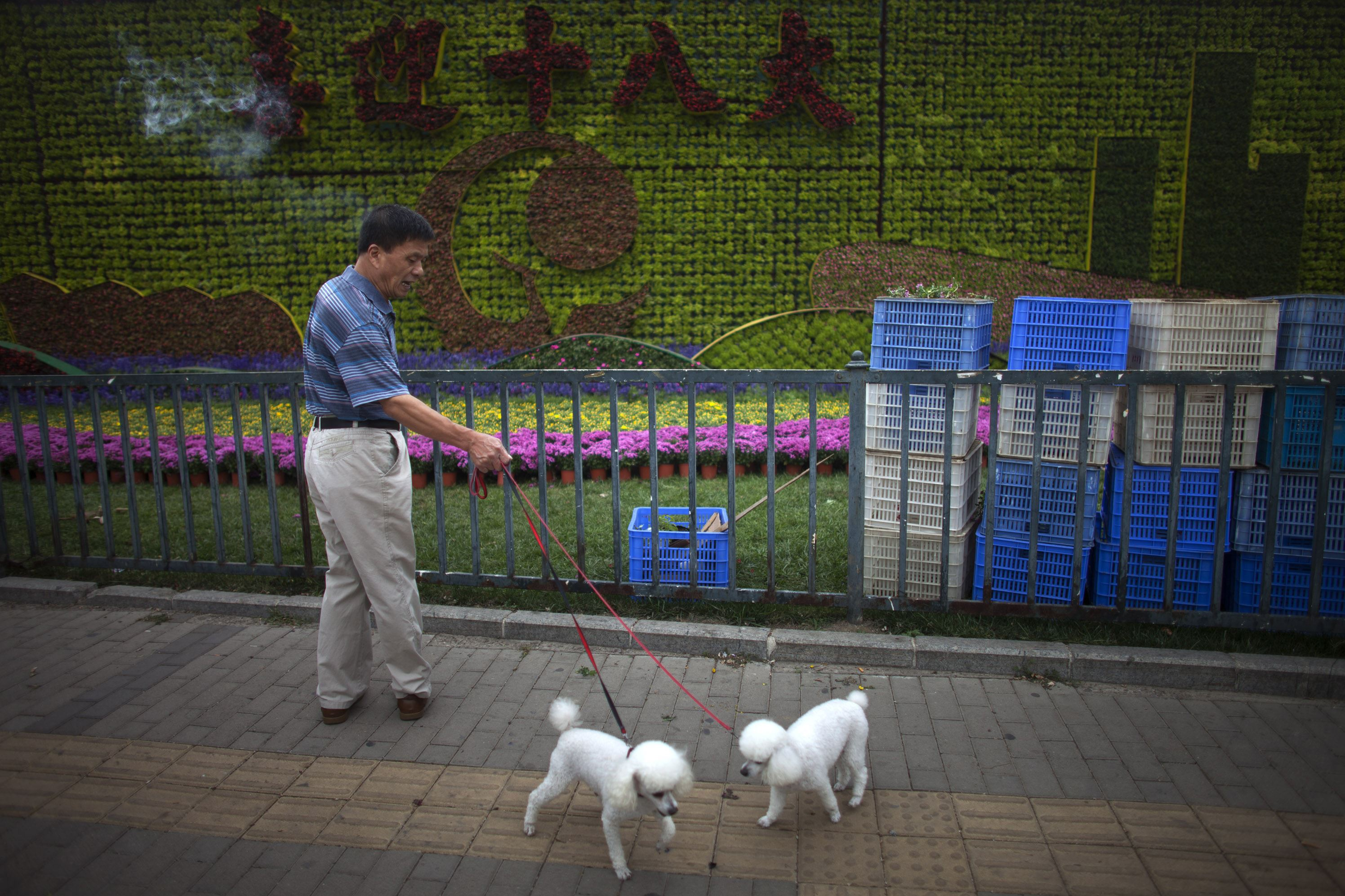 "China Daily Life dogs A man scolds his dogs near a flower wall showing Chinese characters that read: ""Welcome the 18th National Communist Party Congress"" in Beijing in 2012."