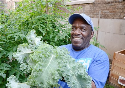 20140819dohomesymca5-4 Michael Rushin picks a handful of kale the Allegheny YMCA on the North Side in The Boxy Caufield Memorial Garden on the grounds of the YMCA.