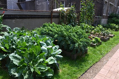 20140819dohomesymca7-6 The Boxy Caufield Memorial Garden on the grounds of the Allegheny YMCA on the North Side. Collards, kale and other vegetables are grown here by the residents.