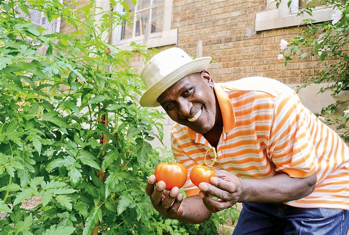 20140819dohomesymca4-3 Rodney Tucker, a resident at the Allegheny YMCA on the North Side, picks tomatoes at The Boxy Caufield Memorial Garden on the grounds of the YMCA.