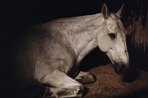 "One of the photos from the Silver Eye exhibit ""Anima"" by Charlotte Dumas."