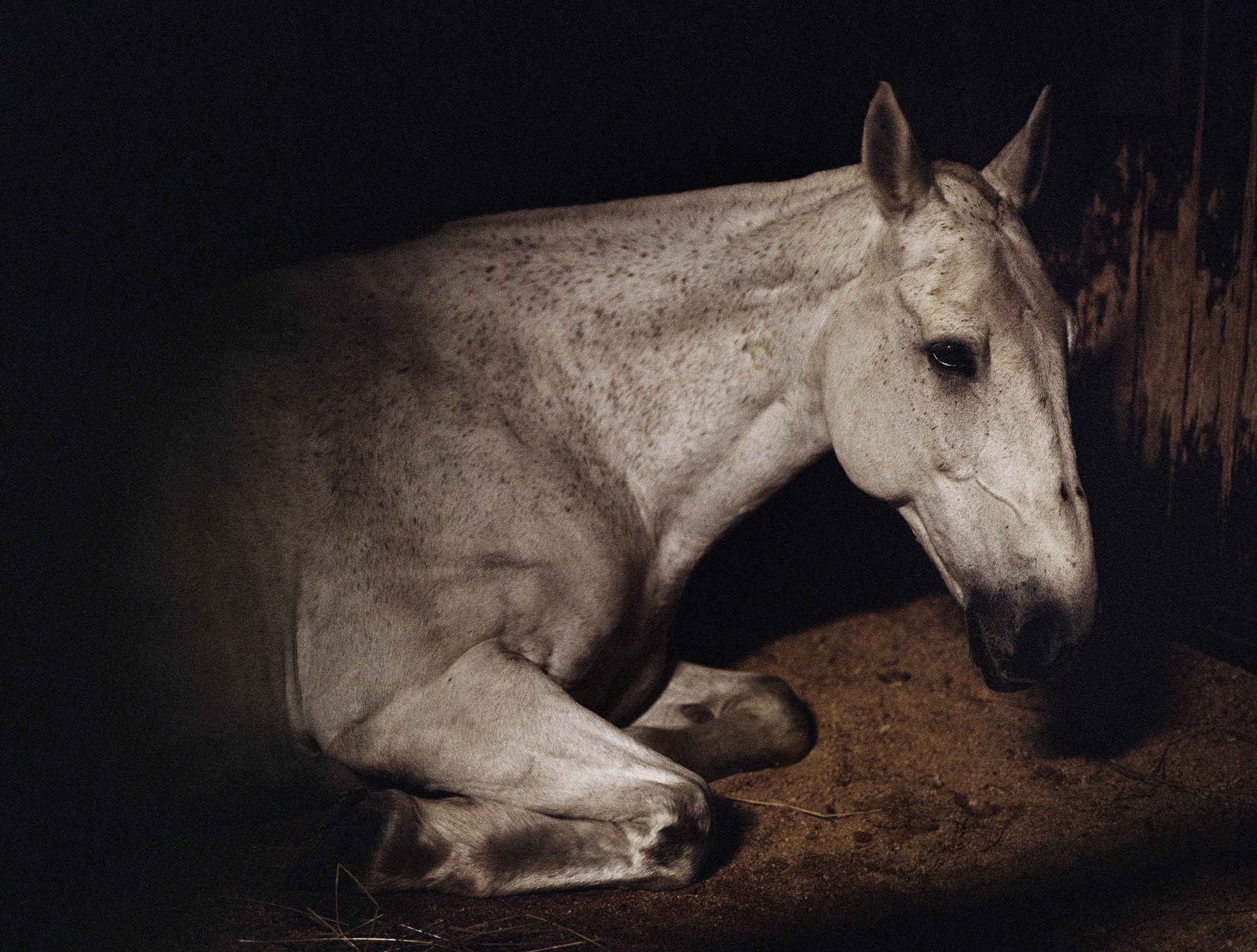 """One of the photos from the Silver Eye exhibit """"Anima"""" by Charlotte Dumas."""