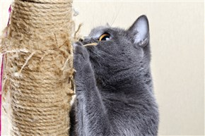 A cat is more likely to use a scratching post that allows it to stretch to its full height.
