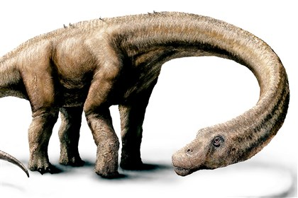 dino An artist's rendering shows a Dreadnoughtous schrani in life. The supermassive dinosaur that would have weighed as much as 60 small cars has been found in Argentina, where it likely perished in a bog some 77 million years ago, palaeontologists say.