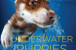 """Underwater Puppies"" by photographer Seth Casteel."
