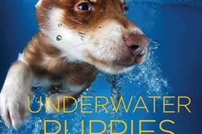 """Underwater Puppies"" by photographer Seth Casteel."