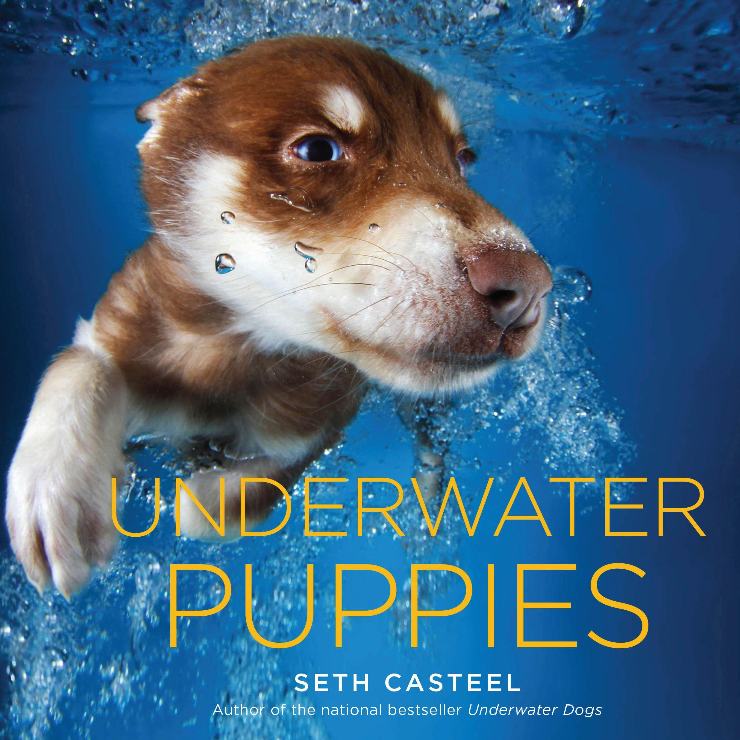 Newfoundland Dog Swimming Underwater