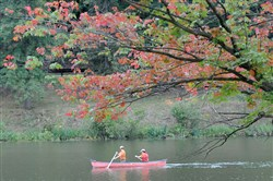 A canoe passes under early-turning fall leaves at North Park Lake last year.