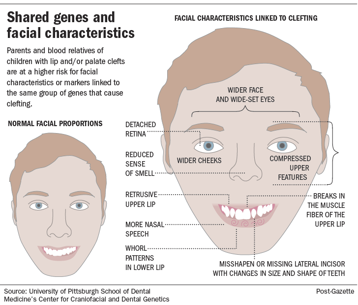 Shared genes and facial characteristics