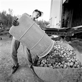 Adam Paterson, 15, strains to dump a barrel of discarded potatoes during a 12-hour work day in Mapleton, Maine.