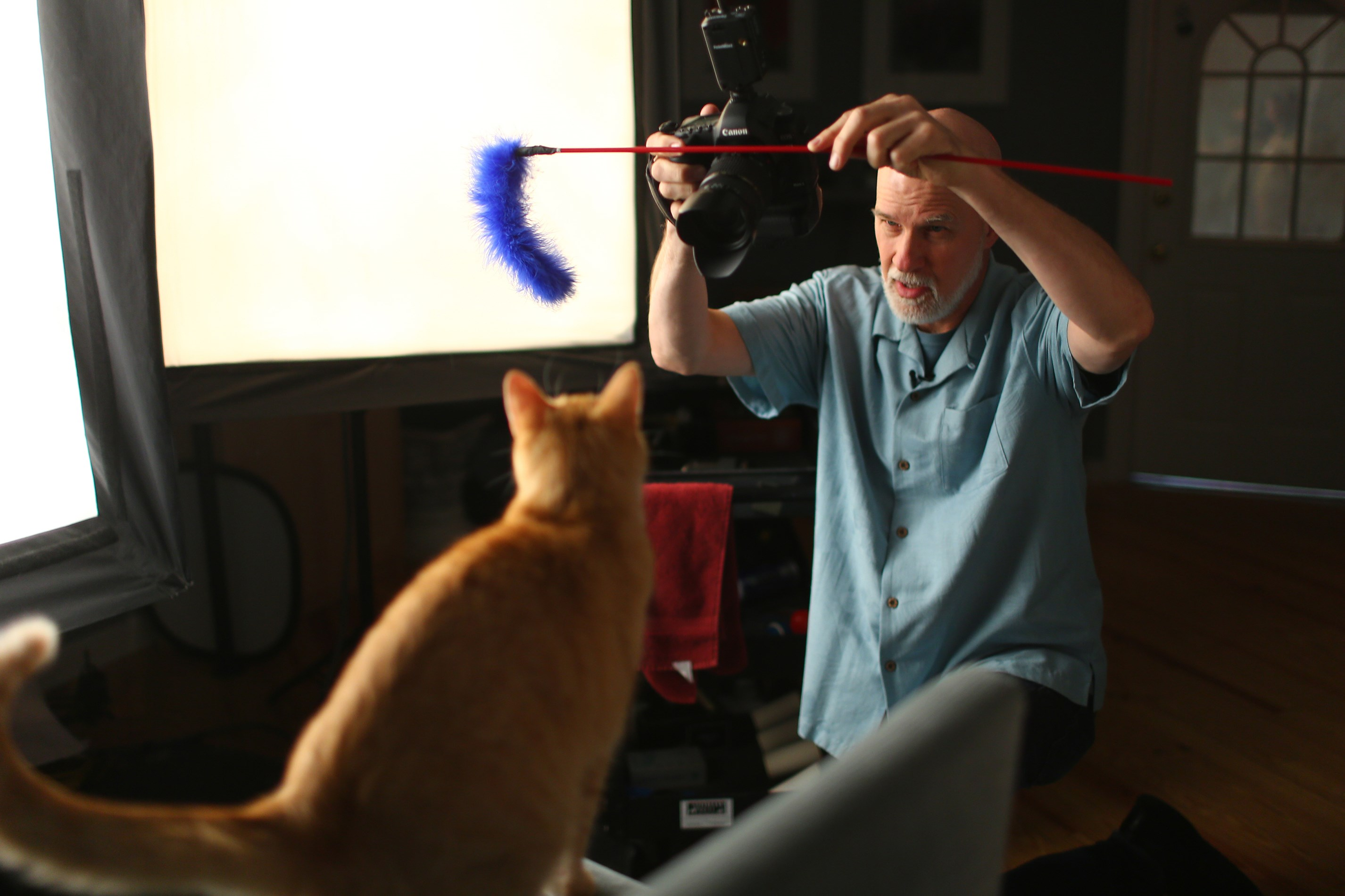 Photographer David Sutton photographs Clifford the cat  last month in Sutton's Evanston, Ill., studio.