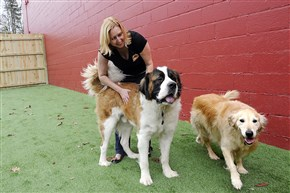 Tammy Richards handles animals Wednesday at The Dog Stop in Monroeville, one of two franchises open in the region.
