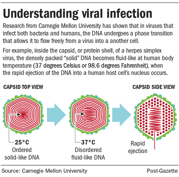 """Viral Infection Link To Sjogren S Syndrome: From Pittsburgh Post Gazette: """"Body Temperature Linked To"""