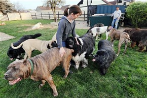 Noreen and Robert Kohl rescue large breed dogs on their property in New Sewickley, Beaver County.