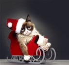 """Grumpy Cat's Worst Christmas Ever"" is one of the new holiday specials.  It will air on Lifetime."