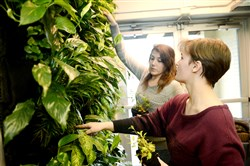 Sarah Dugan and Hannah Barch, both 15 and members of the biology club, pull out unhealthy plants from a living wall powered by a roof top wind turbine at Springdale Junior-Senior High School.