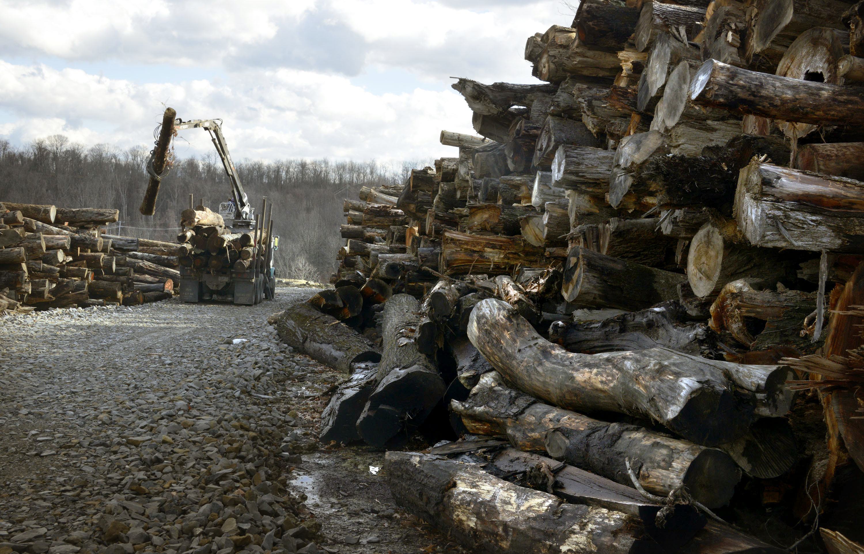 Washington County land clearing Logs that are too large are loaded and will be used for firewood and other products.