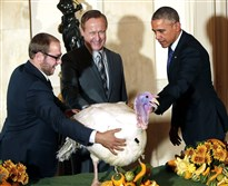 President Barack Obama pardons 49-pound Cheese, the National Thanksgiving Turkey, on Wednesday at the White House. Cole Cooper, left, and Gary Cooper of Cooper Farms in Oakwood, Ohio, provided the turkey. The president — accompanied by his daughters, Malia and Sasha — also spared an alternate turkey, a 47-pounder named Mac, during the annual event. Presidents as far back as Abraham Lincoln have spared turkeys, according to the White House.