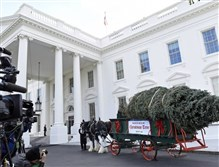 The Official White House Christmas Tree arrives at the White House today. This year's White House Christmas Tree, which will be on display in the Blue Room, is an 18-foot white fir was grown by tree farmers Chris Botek and Francis Botek of Crystal Spring Tree Farm in Lehighton, Pa.