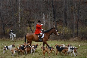 "John Tabachka sounds the horn for the start of a hunt off Pink House Road in Sewickley. The Sewickley Hunt Club is a ""drag"" hunt club, which means they hunt only the scent of a fox - not an actual fox."