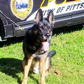 Rocco,  a Pittsburgh Police K-9 officer, was stabbed to death on Jan. 28, 2014.