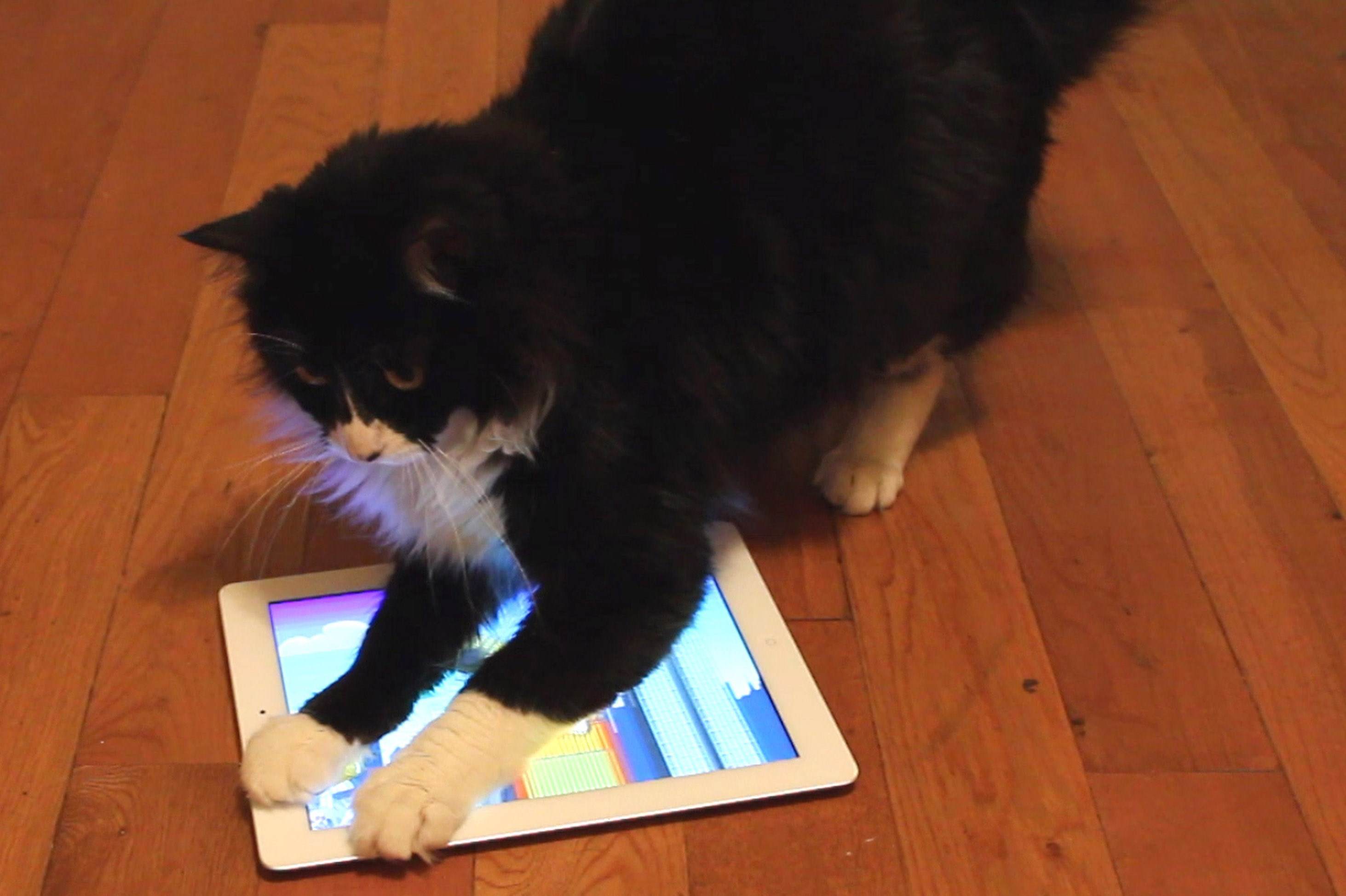 """This video frame grab shows a cat named Beans playing a game called Catzilla on an iPad in Los Angeles. Fuller, Nate Murray and their company, Hiccup, created """"Game for Cats"""", """"Paint for Cats"""" and """"Catzilla""""."""