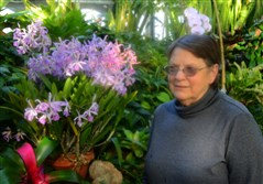 Vicki Strod, a member of the Orchid Society of Western Pennsylvania, at Phipps Conservatory and Botanical Gardens in Oakland with a lush Brassocattleya orchid plant.