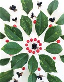 Winter berries like American Holly and black jet bead can be found in Pittsburgh's city parks.
