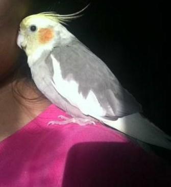 Anyone who sees the bird should call Noor Salman at 412-478-7272.