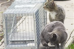 "Cats set next to a trap that many ""trap, neuter and release"" programs use."