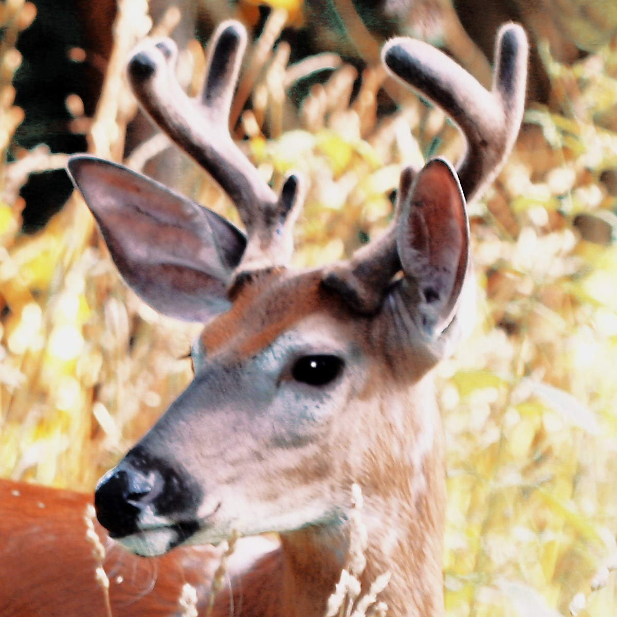 This alert young buck deer was spotted at Snyder's Point in Riverview Park.