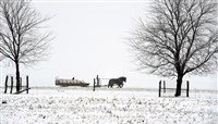 A man hauls farm cargo with a horse-drawn carriage in Leacock Township, Lancaster County this weekend. More snow is on the way for Pennsylvania and New England.