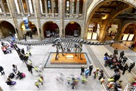 "Visiting school children stream past ""Dippy,""  the plaster replica of a fossilized Diplodocus carnegii, on Thursday in the main hall of the Natural History Museum in London. The beloved replica, sent to England from Pittsburgh more than 100 years ago, is scheduled to be replaced with the bones of a blue whale."