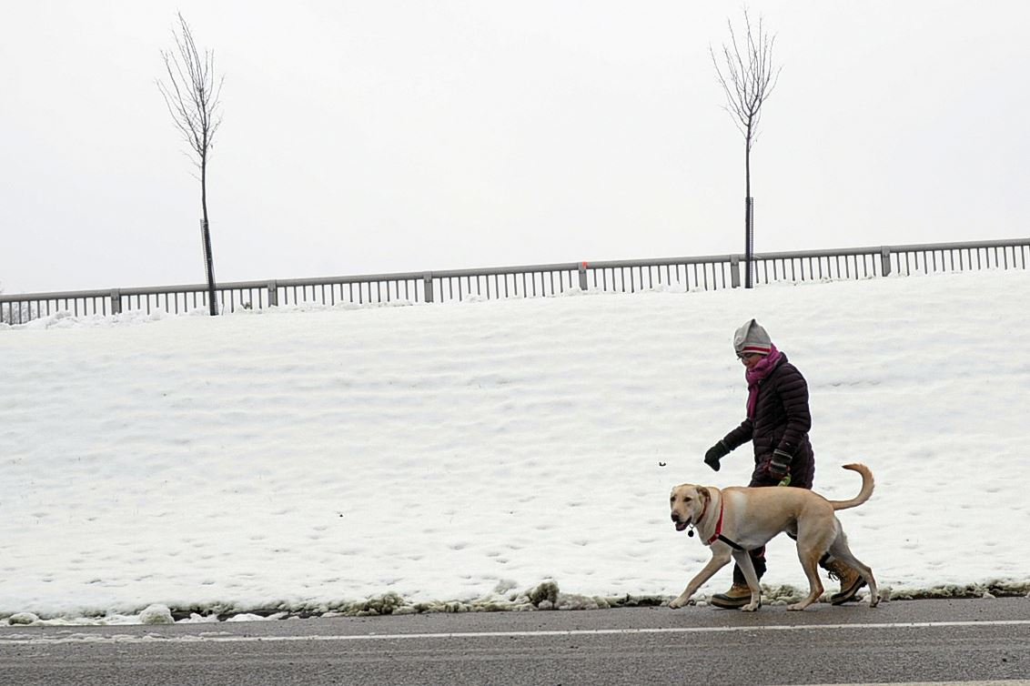 Winter Dog Walking Tips: Protect Your Dog in Bone-Chilling ...