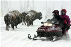 ** FILE ** Snowmobilers pause to watch passing bison near Norris Junction inside Yellowstone National Park, Wyo., on Jan. 27, 2002. Snowmobiles could continue using Yellowstone and Grand Teton national parks for at least the next three winters under a federal proposal set for release Thursday, Aug. 19, 2004. (AP Photo/Nati Harnik, File)