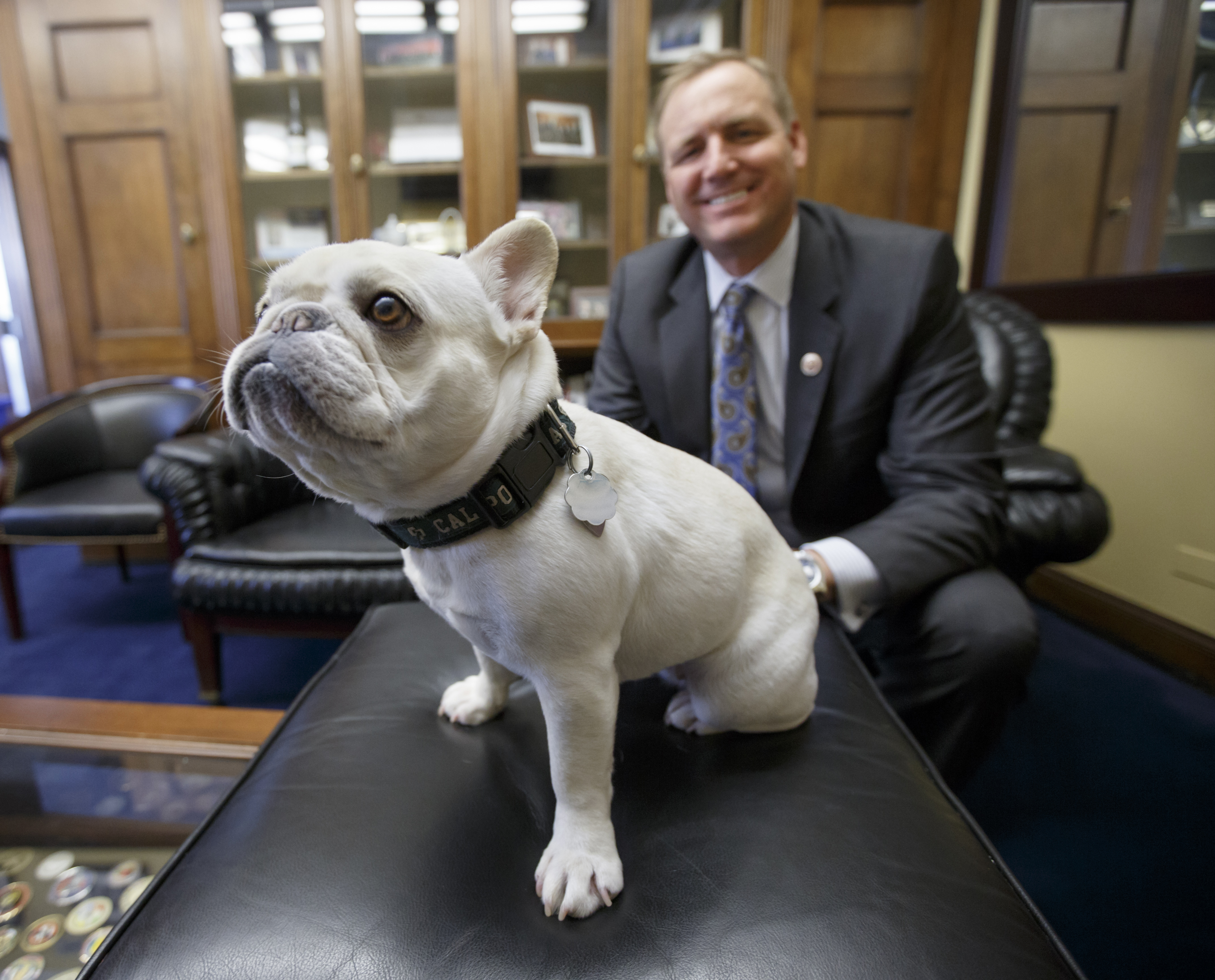 In this photo taken Feb. 11, 2015, Rep. Jeff Denham, R-Calif. poses with Lily, his 15-pound French bulldog in his office on Capitol Hill in Washington. It all began with Lily, a 15-pound snowball of a French bulldog with dark mahogany eyes, a wrinkly nose and a penchant for jumping on furniture and laps so that she can get closer to her many human visitors. She and her owner, Rep. Jeff Denham of California, take the occasional coast-to-coast plane ride together. But when he tried to take her on Amtrak a couple years back, he learned that only service dogs were allowed aboard. It's a policy he's been trying to change ever since, and he appears to be gaining momentum.  (AP Photo/J. Scott Applewhite)