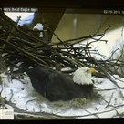 Screen grab from the live feed of the Hays eagle nest in February 2015.