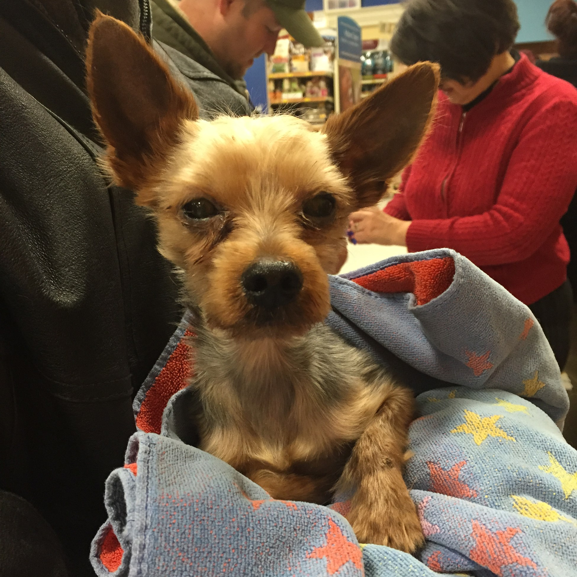Dexter waits to be handed off at Petsmart in Monroeville by the volunteers who found him.