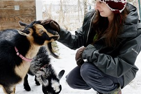 Carrie Pavlik, shown with Nigerian dwarf goats Lovesong, left, and Primrose, is managing a crowdfunding campaign to launch Steel City Grazers, a business that will rent out a herd of goats to clear property inaccessible or dangerous for people and mowers.