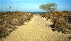 The 25-acre Headlands Dunes State Nature Preserve is filled with sandy hummocks and sand-loving vegetation. The dunes are up to 20 feet tall.