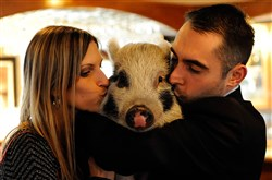 Lauren and Chris Miladinovich kiss their pet pig Nola.