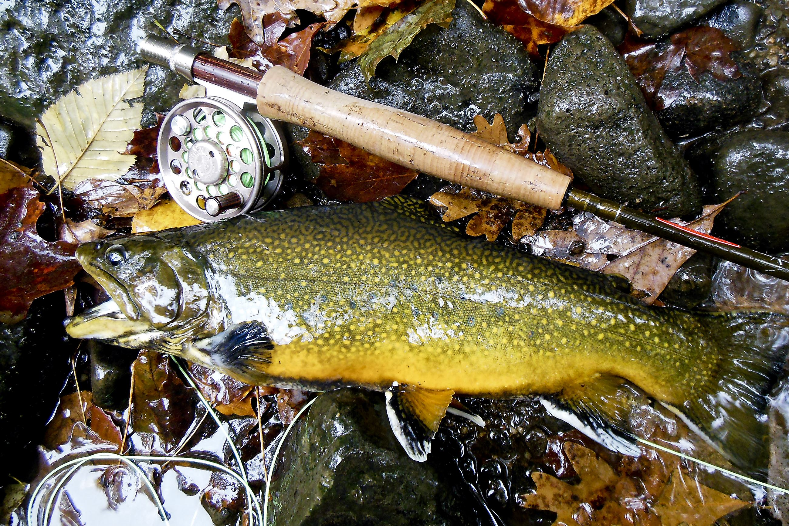 Good advice on trout fishing is available if you know how for Fishing in pittsburgh
