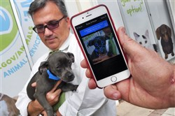 Miami-Dade Animal Services director Alex Munoz, center, holds Ringo, a terrier mix, as Finding Rover founder John Polimeno logs a photo of Ringo in the pet-finding app.