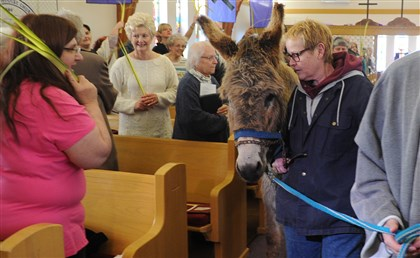 Jeannie Carr leads Joey, a three-year-old donkey, into Beulah Park United Methodist Church in McKeesport during the annual Palm Sunday procession.