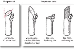 Illustration on proper and improper Pruning