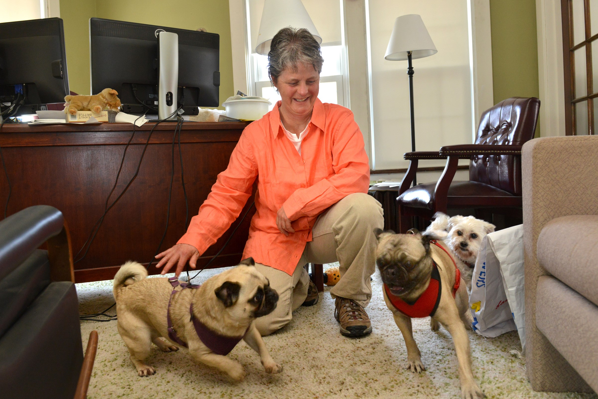 Pat McKenna, fiscal director at HOPE Center, brings her three rescue dogs to work. Pugs Pani, left, and Annabelle race around her office as Bridget, a maltese mix watches.