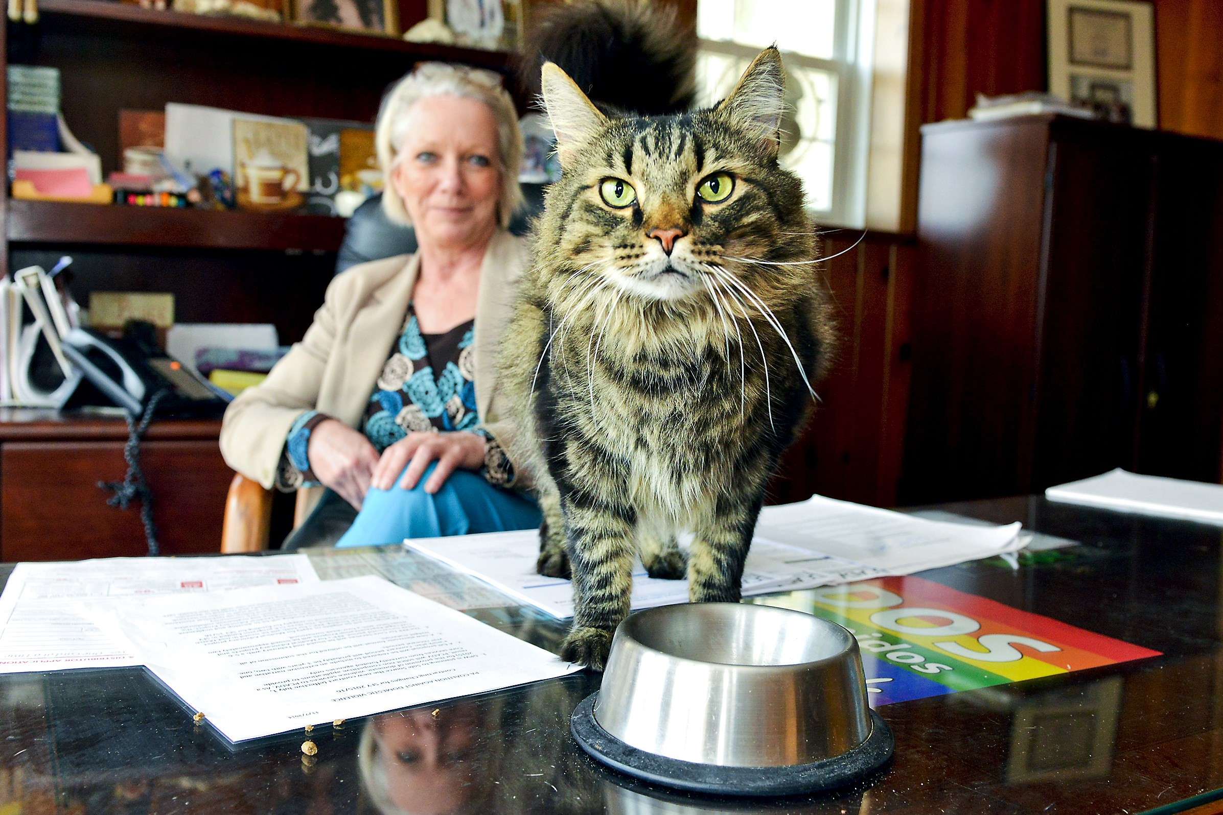 Michelle Bond, executive director of HOPE Center in Tarentum, shares her office with Logan, a Maine coon cat she rescued.  HOPE Center is one of only three shelters for victims of domestic violence in Pennsylvania that allow women to bring their pets.  Logan is up for adoption.