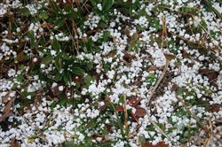 Graupel gathered on the ground today.