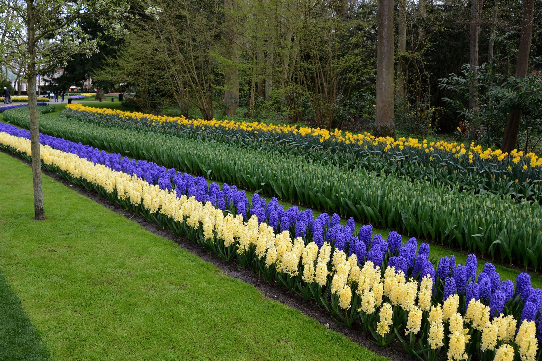 Row Flower Garden : Spring visit to keukenhof s gardens exceeds all