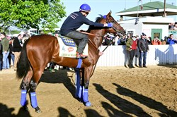 Exercise rider Jorge Alvarez adjusts the dribble of Kentucky Derby hopeful American Pharoah before working out at Churchill Downs Wednesday.